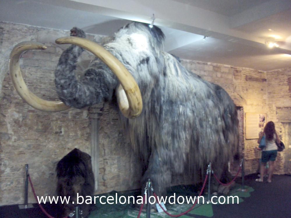 A stuffed replica of a mammoth in the mammoth museum, Barcelona