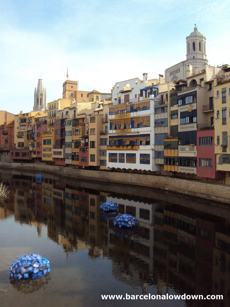Blue flowers in front of the picturesque colourfulhouses which line the River Onyar in Girona northen Spain