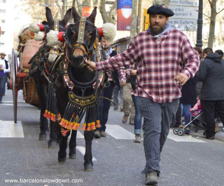 Man in Basque costume leading mules in the 3 tombs parade Barcelona