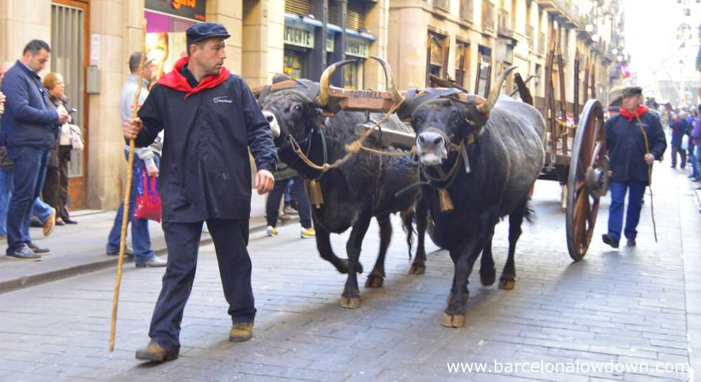 Ox cart in the Tres tombs parade , Barcelona Carrer de Ferran