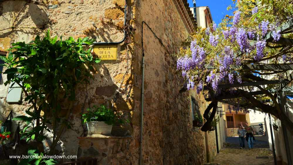 Flowers blooming in the narrow backstreets of Tossa de Mar, Costa Brava, Spain